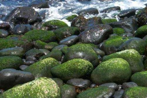 Lichen on rocks, near Portsea, Vic, Australia.